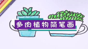 多肉植物简笔画视频   多肉植物简笔画步骤